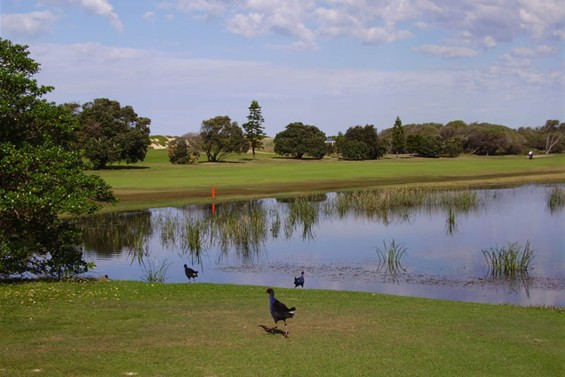 Belmont Golf Course Newcastle Golf Courses